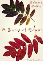 A Sprig of Rowan