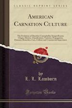 American Carnation Culture