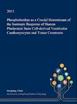 Phospholamban as a Crucial Determinant of the Inotropic Response of Human Pluripotent Stem Cell-Derived Ventricular Cardiomyocytes and Tissue Construc