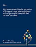 The Neuroprotective Signaling Mechanisms of Telomerase Via the Induction by Brain-Derived Neurotrophic Factor (Bdnf) in Nervous System Injury