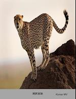 Speedy Cheetah
