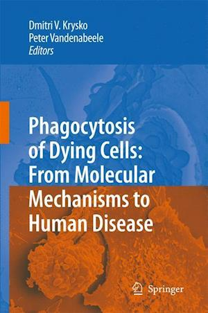 Phagocytosis of Dying Cells: From Molecular Mechanisms to Human Diseases
