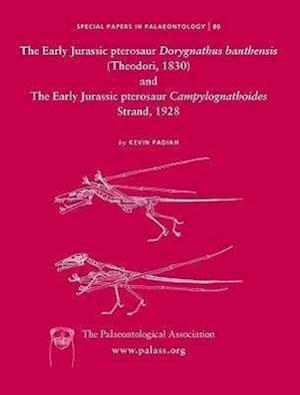 Early Jurassic pterosaur Dorygnathus banthensis (Theodori, 1830) and The Early Jurassic pterosaur Campylognathoides Strand, 1928