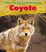 Coyote (Read and Learn: A Day in the Life: Grassland Animals)