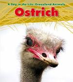 Ostrich (Read and Learn: A Day in the Life: Grassland Animals)
