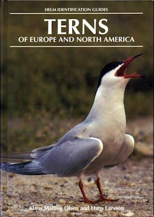 Terns of Europe and North America af Klaus Malling Olsen