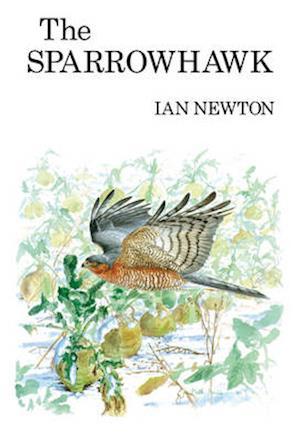 The Sparrowhawk