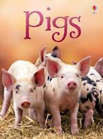 Pigs (Beginners)