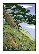 Coastal Cypress (Unboxed)