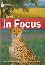 Cheetahs in Focus (Footprint Reading Library, Level 6)