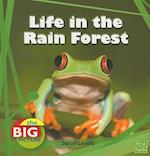 Life in the Rain Forest (First Facts: The Big Picture: Homes)