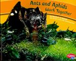 Ants and Aphids Work Together (Pebble Plus: Animals Working Together)
