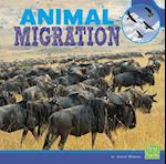 Animal Migration (First Facts)