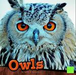 Owls (First Facts)