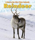 Reindeer (Heinemann Read and Learn)