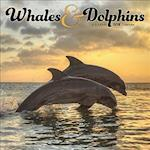 Whales & Dolphins 2018 Calendar