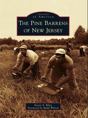 Pine Barrens of New Jersey
