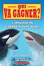 Qui Va Gagner? L'Epaulard Ou Le Grand Requin Blanc?