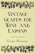 Vintage Grapes for Wine and Raisins