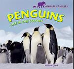 Penguins (Animal Families)