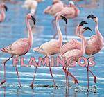 Flamingos af Maddie Gibbs