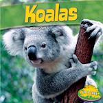 Koalas (Up a Tree)