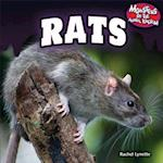 Rats (Monsters of the Animal Kingdom)