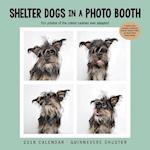 Shelter Dogs in a Photo Booth 2018 Calendar