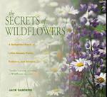 Secrets of Wildflowers