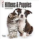 Kittens & Puppies 2018 Calendar