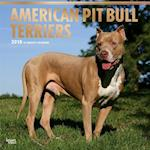 American Pit Bull Terriers 2018 Calendar