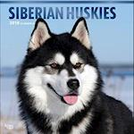 Siberian Huskies 2018 Calendar