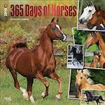 365 Days of Horses 2018 Calendar