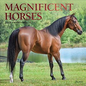 Magnificent Horses 2018 Calendar