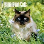 2018 Himalayan Cats Wall Calendar