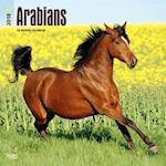 2018 Arabians Wall Calendar