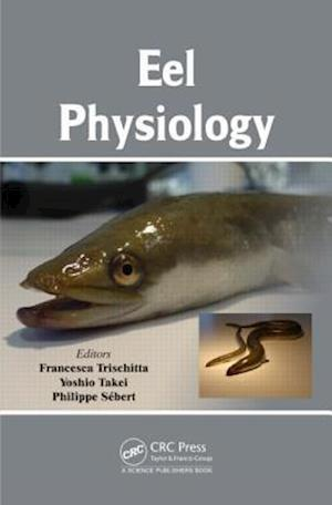Eel Physiology