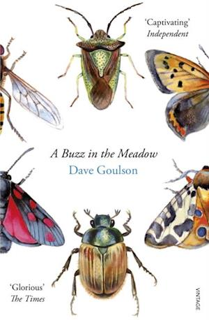 Buzz in the Meadow af Dave Goulson