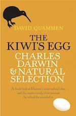Kiwi's Egg
