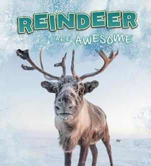 Reindeer Are Awesome