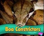 Boa Constrictors (Pebble Plus)