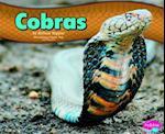 Cobras (Pebble Plus)