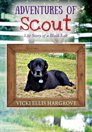Bog, hæftet Adventures of Scout: Life Story of a Black Lab af Vicki Ellis Hargrove