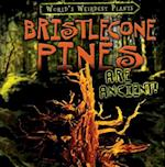 Bristlecone Pines Are Ancient! (Worlds Weirdest Plants)