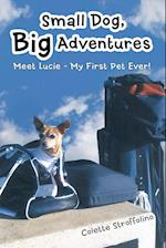 Small Dog, Big Adventures: Meet Lucie - My First Pet Ever!