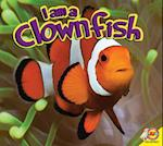 Clownfish (I Am)