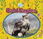 Bald Eagles (Little Backyard Animals)