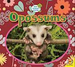 Opossums (Little Backyard Animals)