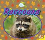 Raccoons (Little Backyard Animals)