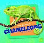 Get to Know Chameleons (First Facts)